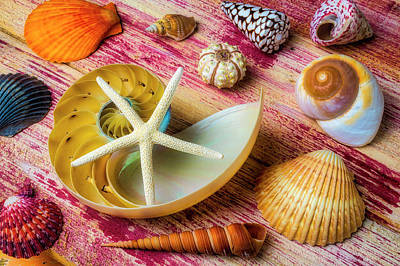Photograph - Star And Beautiful Seashells by Garry Gay