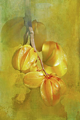 Photograph - Star Fruit by HH Photography of Florida