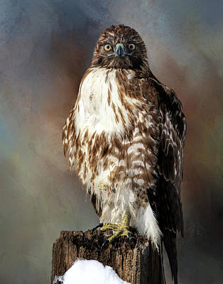 Photograph - Stare Down With A Hawk by Gloria Anderson