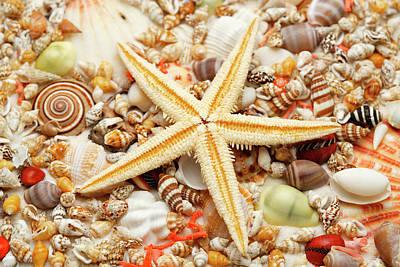 Starfish And Assorted Seashells Art Print by Imagemore Co.,ltd.