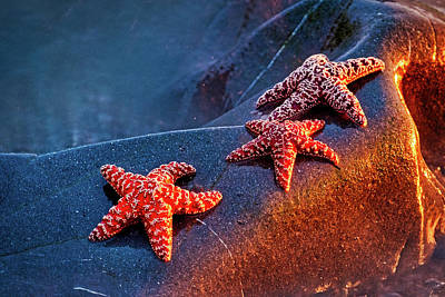 Photograph - Starfish At Dusk by Stuart Litoff