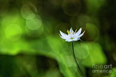 Impressionism Photos - Starflower 2 by Veikko Suikkanen