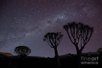 Photograph - Stargazer  by Sandra Bronstein