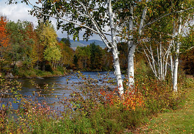 Photograph - Stark, Nh Fall White Birch  by Betty Pauwels