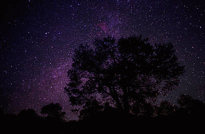 Photograph - Starry Sky With Silhouetted Oak Tree by Tim Fitzharris/ Minden Pictures
