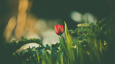 Photograph - Start Of Spring by Dheeraj Mutha