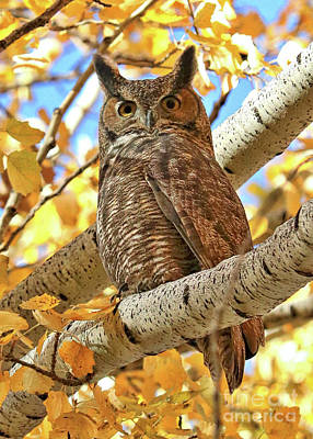 Photograph - Statuesque Great Horned Owl by Carol Groenen