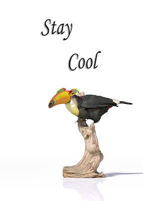 Comics Royalty-Free and Rights-Managed Images - Stay Cool Tucan by Betsy Knapp