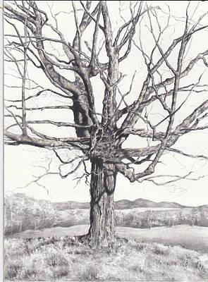 Drawing - Steele Hill Maple by Carol Phenix