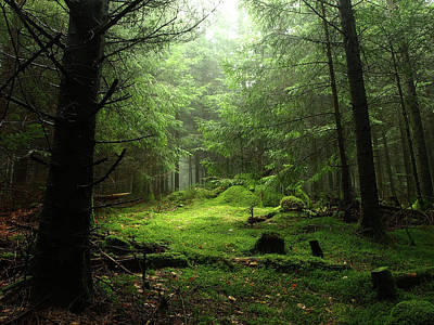 Photograph - Sterious Forest by Guillaume Temin