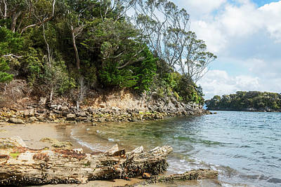 Photograph - Stewart Island New Zealand Beach by Joan Carroll