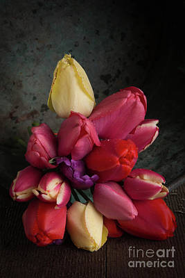 Photograph - Still Life With Tulips 35 by Edward Fielding