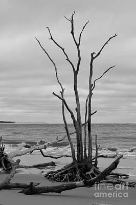 Photograph - Still Standing by Carol Groenen