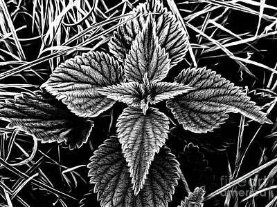 Painting - Stinging Nettle by Odon Czintos