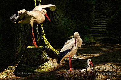 Photograph - Stork-family by Kira Bodensted