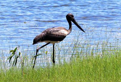 Girl Wall Art - Photograph - Stork Out For A Walk by Joan Stratton