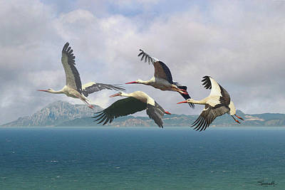 Digital Art - Storks Over The Straits Of Gibraltar by Spadecaller