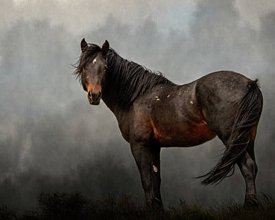 Photograph - Stormy by Mary Hone