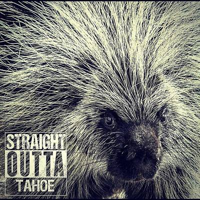 Photograph - Straight Outta Tahoe by Martin Gollery