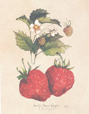 Wall Art - Painting - Strawberries And Blossoms by Carolyn Shores Wright