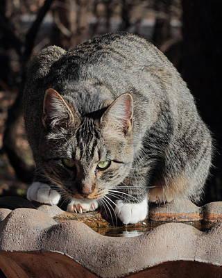 Photograph - Stray Cat 4402 by John Moyer