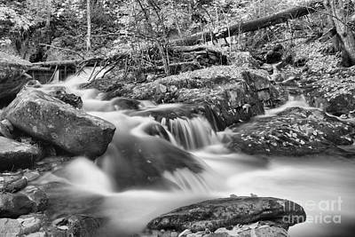 Photograph - Streaming Through The Chester Blandford Forest Black And White by Adam Jewell