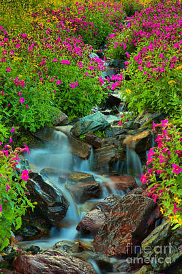 Photograph - Streaming Through The Wildflowers by Adam Jewell