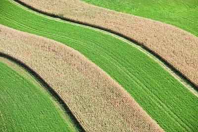 Photograph - Strip Farming Corn And Hay Aerial View by Banksphotos