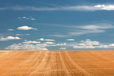 Ledgers Wall Art - Photograph - Stubble Galore by Todd Klassy
