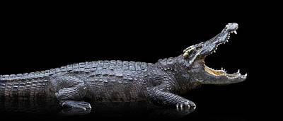 Photograph - Studio Photos Of Crocodiles Profile On by John Lund