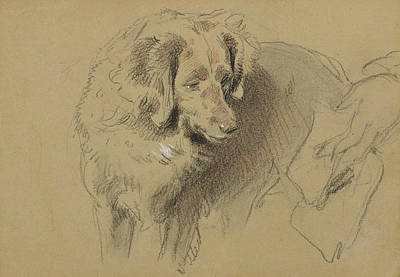 Drawing - Study Of A Dog by Edwin Landseer
