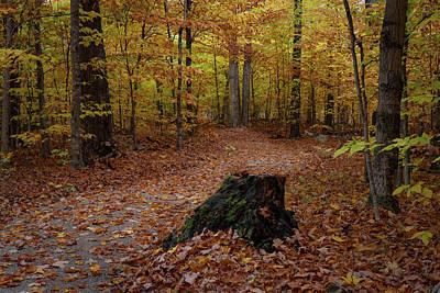 Photograph - Stump by David Heilman