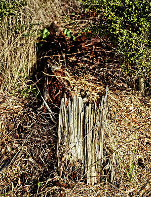 Photograph - Stump In Swamp by Maggy Marsh