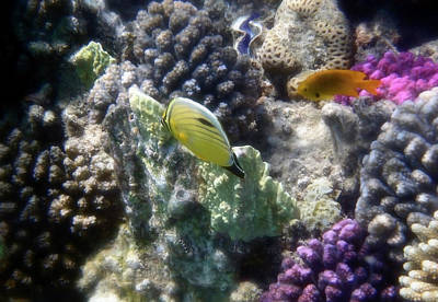 Photograph - Stunning And Colorful Red Sea Underwater World  by Johanna Hurmerinta