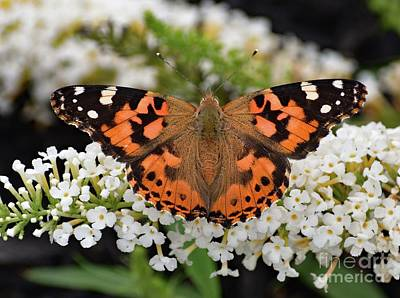 Book Quotes - Stunning Painted Lady by Cindy Treger