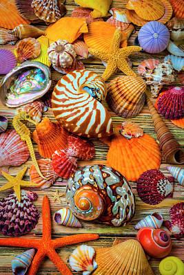 Photograph - Stunning Seashell Still Life by Garry Gay