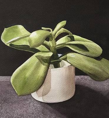 Design Turnpike Books - Succulent 4 by Deanne Salter