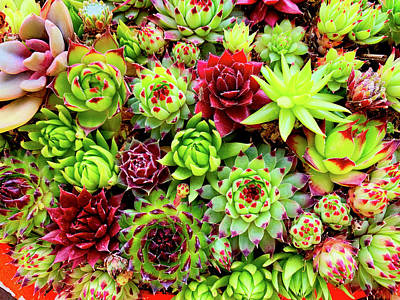 Photograph - Succulent Abundance by Garry Gay