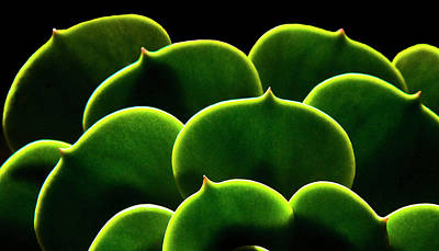 Photograph - Succulent by Fogline Studio...photos Of Everythhing That Is Beautiful