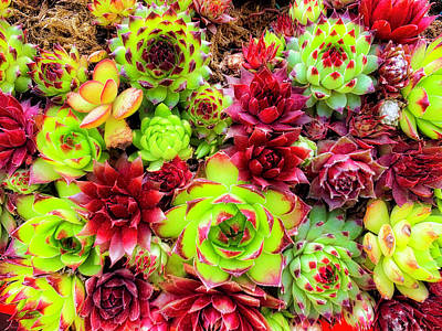 Photograph - Succulent Garden by Garry Gay