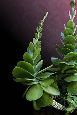 Photograph - Succulent Spear by Debi Dalio