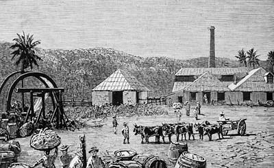 Photograph - Sugar Mills by Hulton Archive