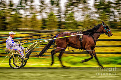 Photograph - Sulky Cart Racer by Nick Zelinsky