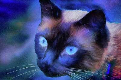 Photograph - Sulley's Blues by Theresa Campbell