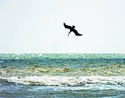 Photograph - Sullivan's Island 3  Pelican Dive by Lizi Beard-Ward