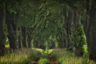 Photograph - Summer Avenue by Dawn Van Doorn