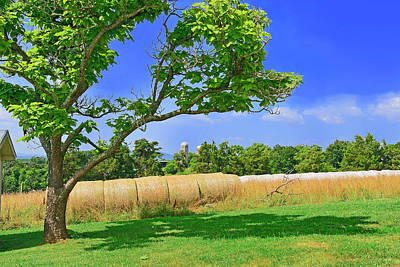 Photograph - Summer Bales Of Rolled Hay by The American Shutterbug Society