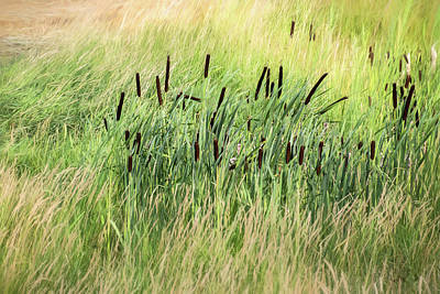 Photograph - Summer Cattails In Field Of Grass - by Julie Weber