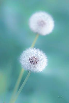 Photograph - Summer Dandelion by Christina Rollo