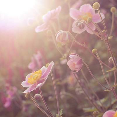 Photograph - Summer Flowers In Evening Sun by Tjarko Evenboer / The Netherlands